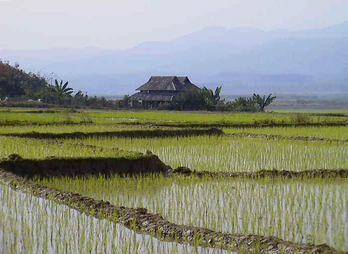 rice-paddy-house